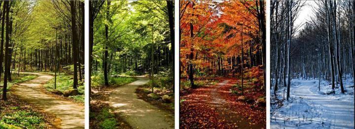 Когда осенью